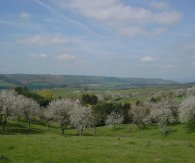 Teme Valley in bloom