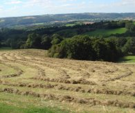Haymaking Shelsley Beauchamp